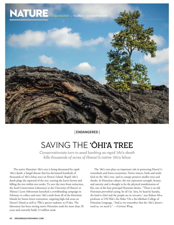 GMH Ohia Tree